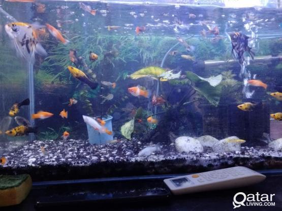 Full set Aquarium with fish for sale