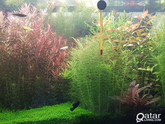 Aquarium plants and fishes for sale....