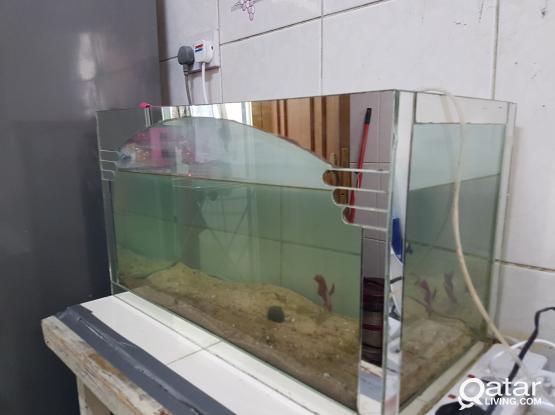 Customized aquarium for sale