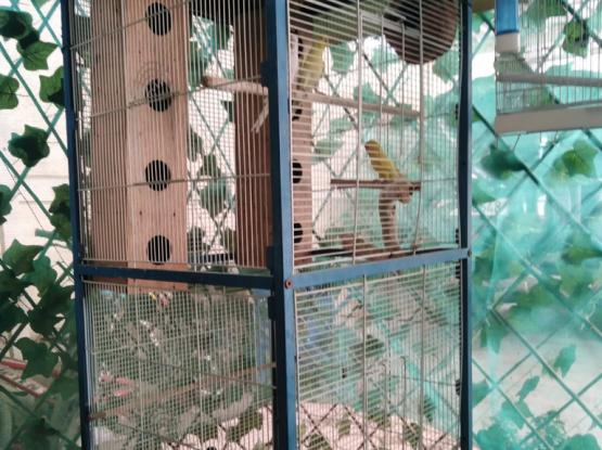 Big Bird Cage With Birds
