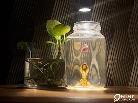 Nano Aquarium / Nano Fish Tank