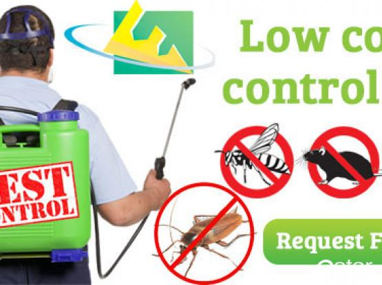 Pest Control & sanitization services - 24/7 available