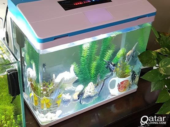 Aquariums 02nos with fishes for sale....