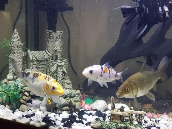 Aquarium fishes available....