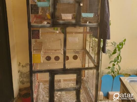 Birds + Big cage + 30 kilo Foods