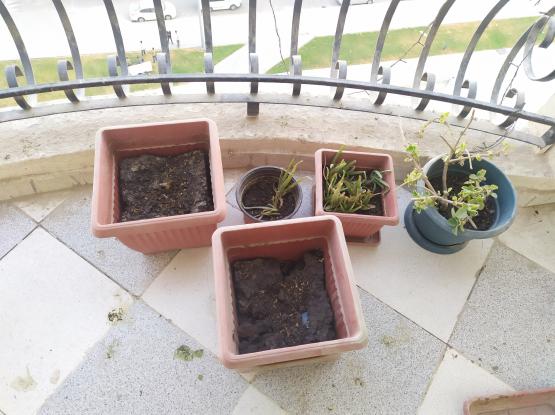 Flower Pots + Soli