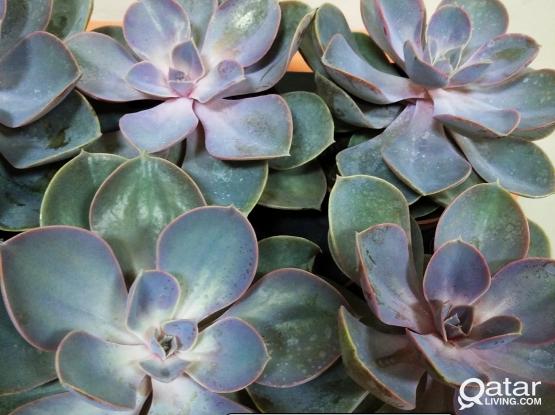 Indoor plants for sale.