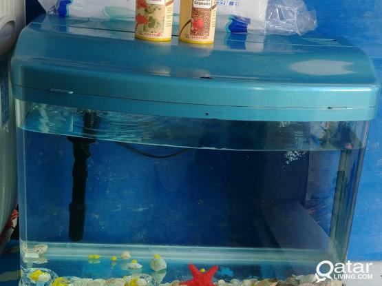 Fish aquarium with pump food filter
