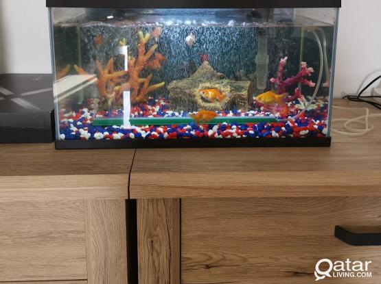 Aquarium - Fish Tank w/Gold Fishes and Accessories (almost new)