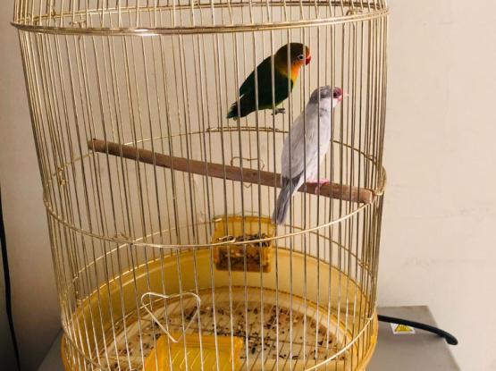Bird Cage Big One
