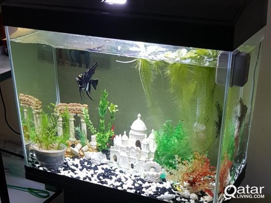 Aquariums, fishes, plants for sale