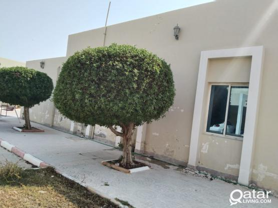 Grand Offer!! 3BR Villa Available for Rent in Old Airport