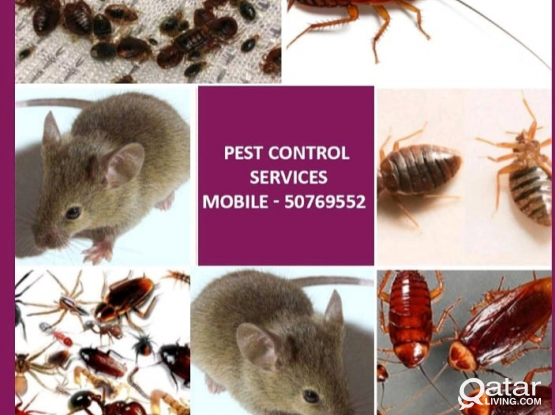 Pest Control Services Avaiable