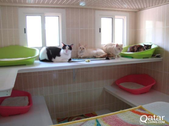 Luxury Cat Boarding Hotel