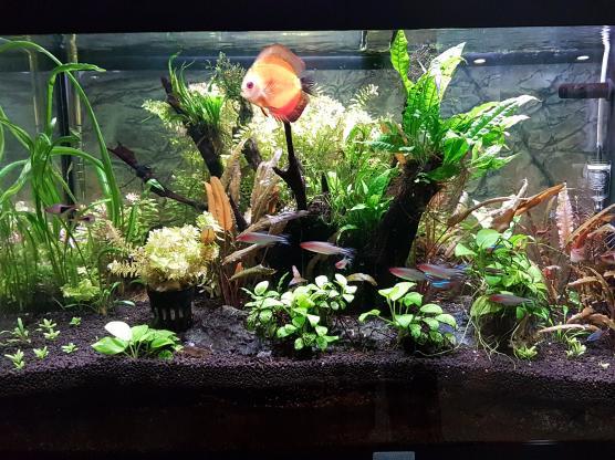Juwel Aquarium for sale