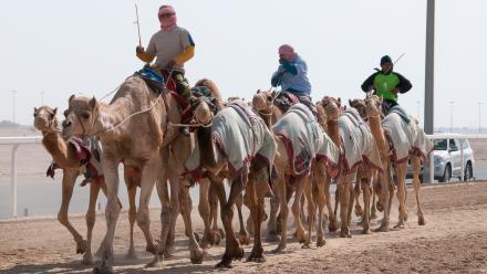 WATCH: Welcome to Qatar - Camel Racing in Al Shahaniya