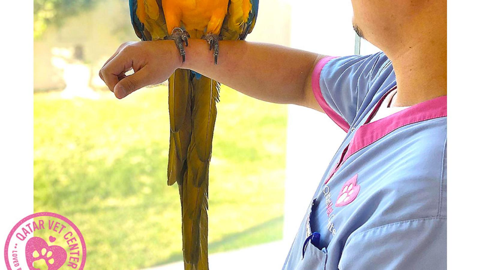 Missing pet - Macaw