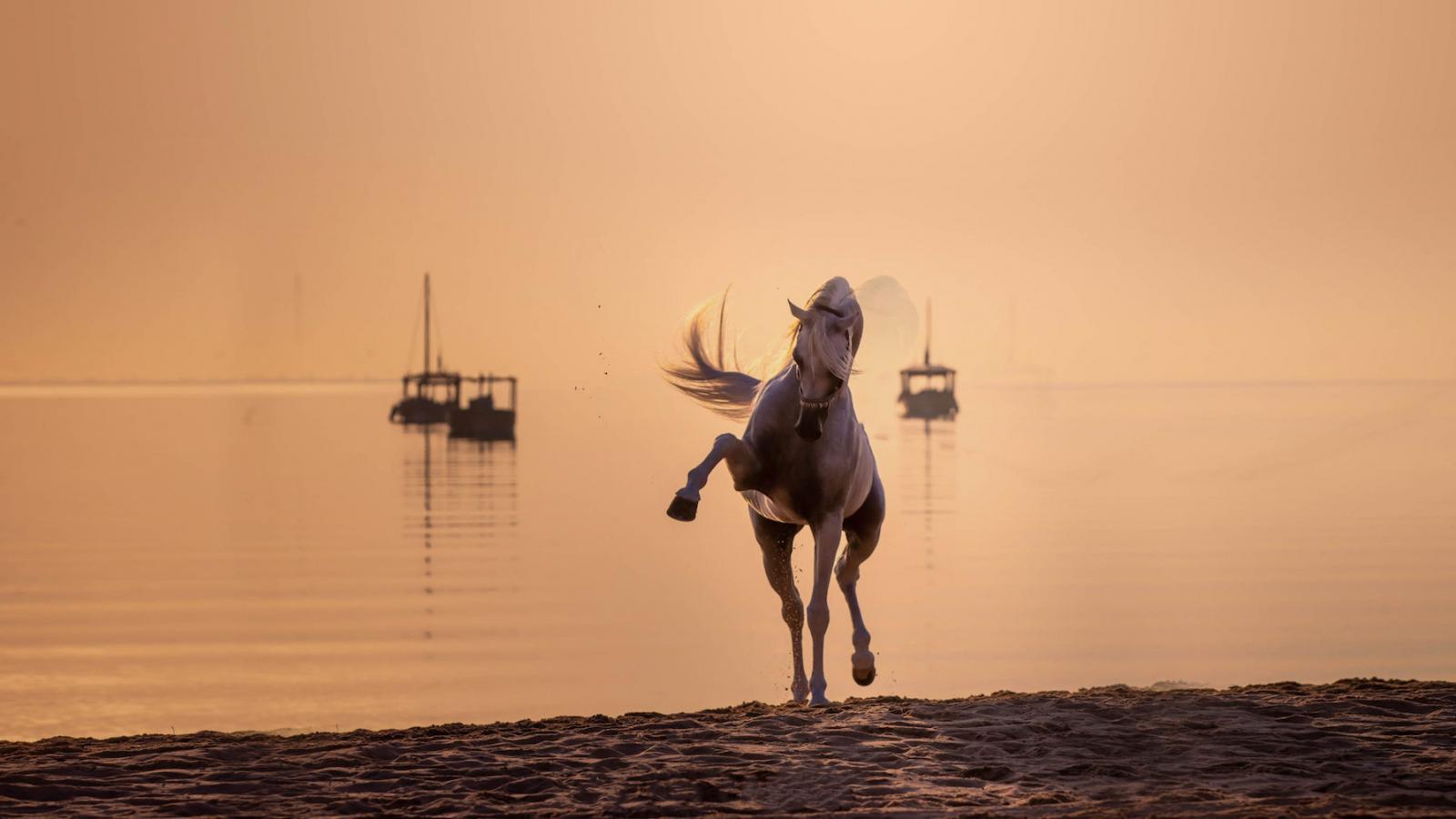 Title Show dates for Katara International Arabian Horse Festival amended