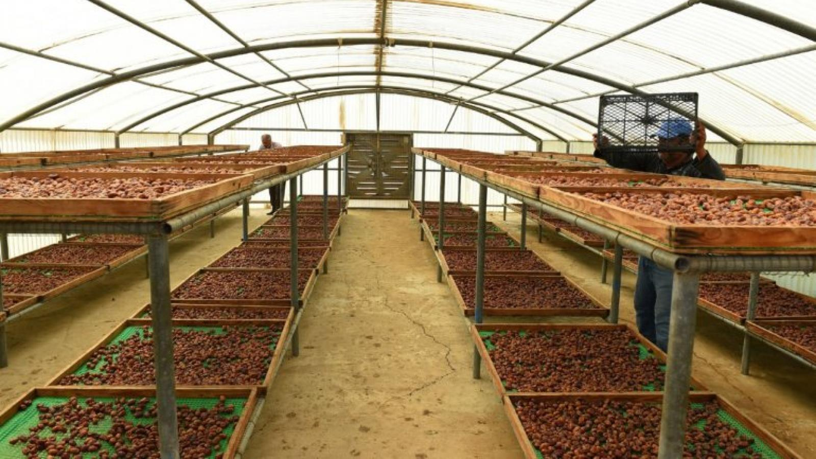 MME to supply Polycarbonate Drying House to date farms