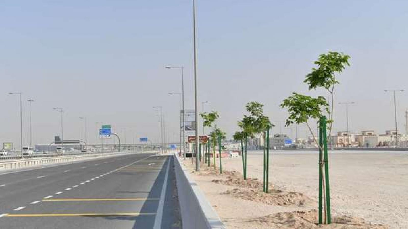Qatar to plant over 4,400 trees on Shamal Road