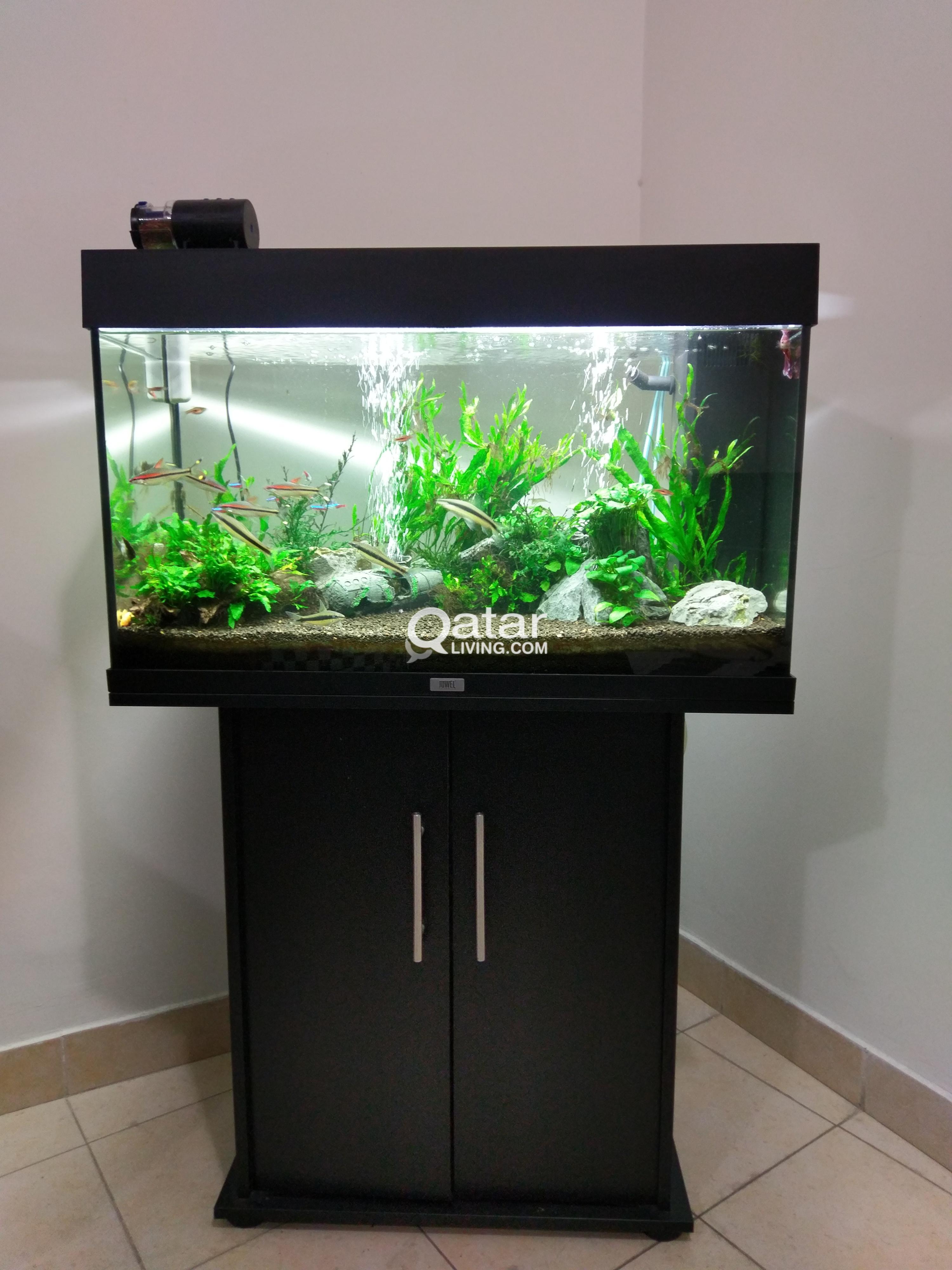 Branded aquarium fish tank for sale qatar living for Tropical fish tanks for sale