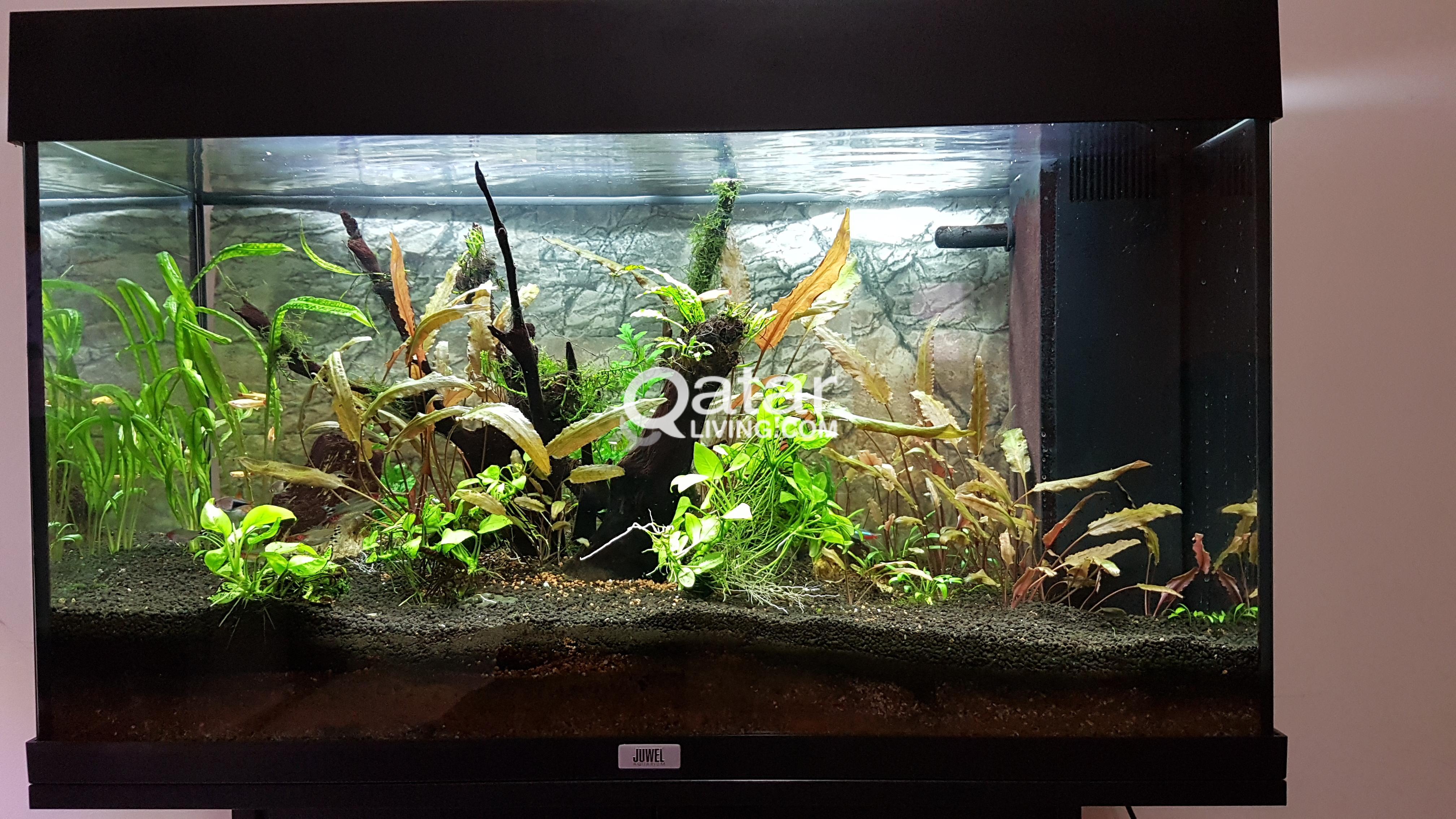 Juwel Rio 125 Aquarium 1000 Aquarium Ideas