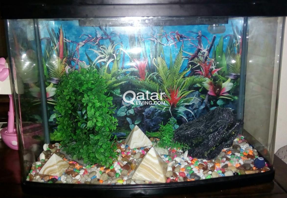 aquarium fish tank for sale 66l qatar living