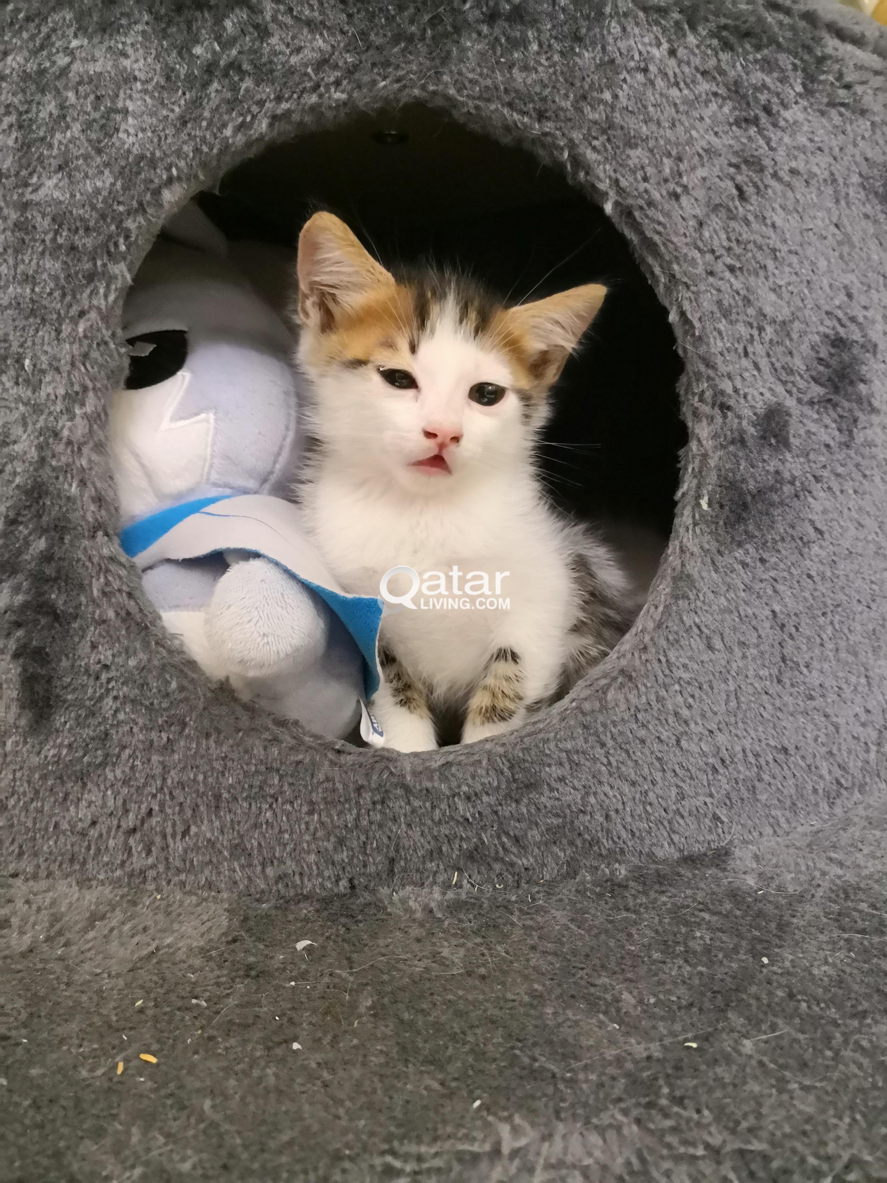 For adoption