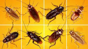 PEST CONTROL SERVICES Guaranteed Satisfaction