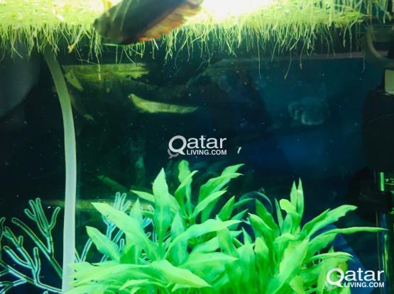 Fish tank with betta fish