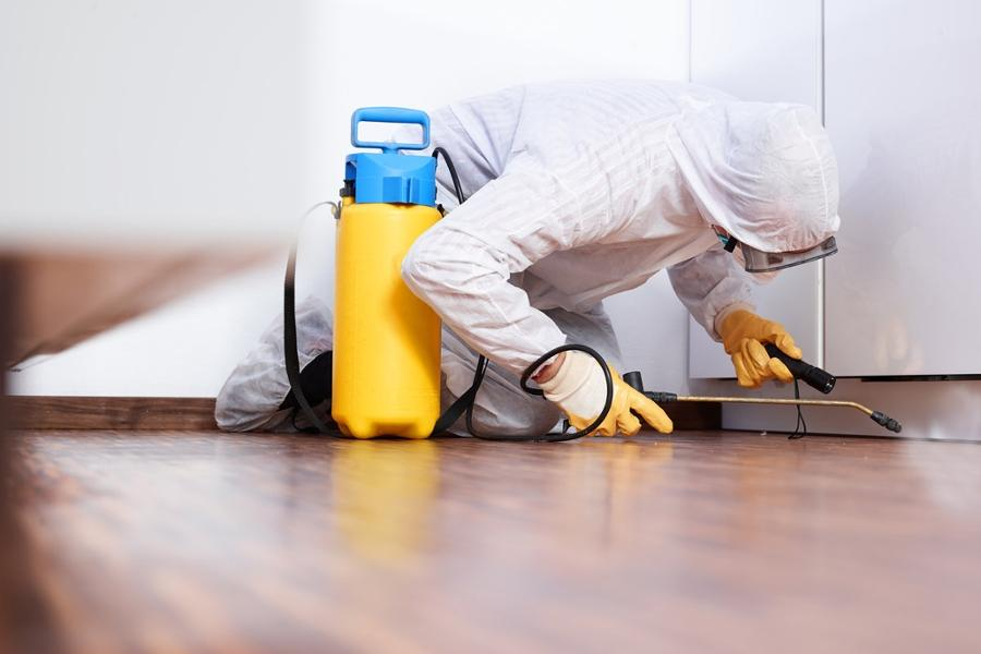 PEST CONTROL / DISINFECTION - 55957958
