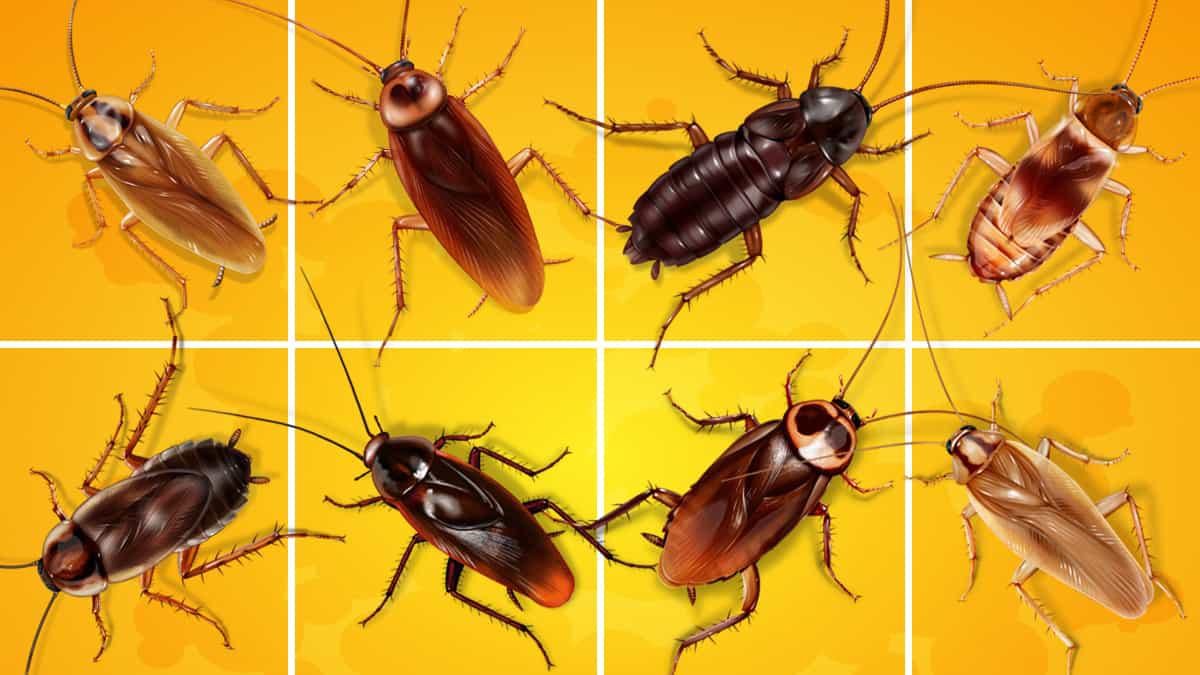 Pest Control Services – Al Wakra  / Mesaieed /Al W