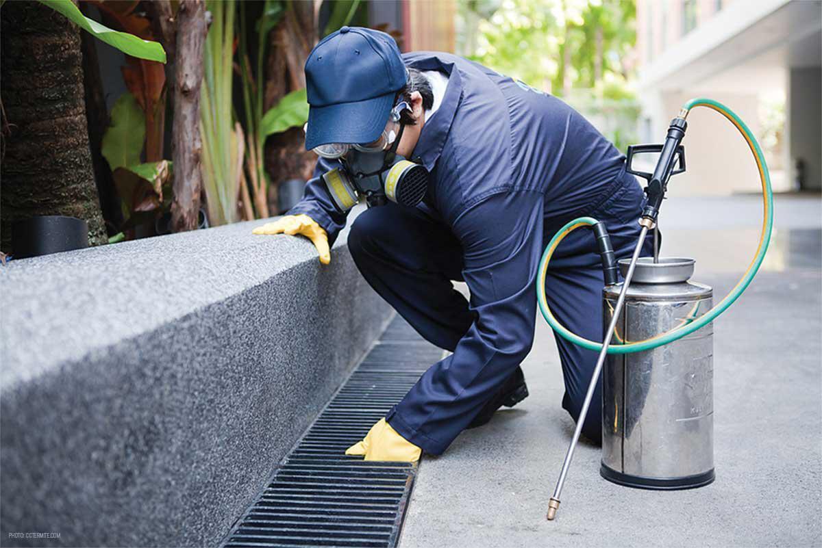 Pest Control Services – Al Wakra / Mesaieed /Al Wu