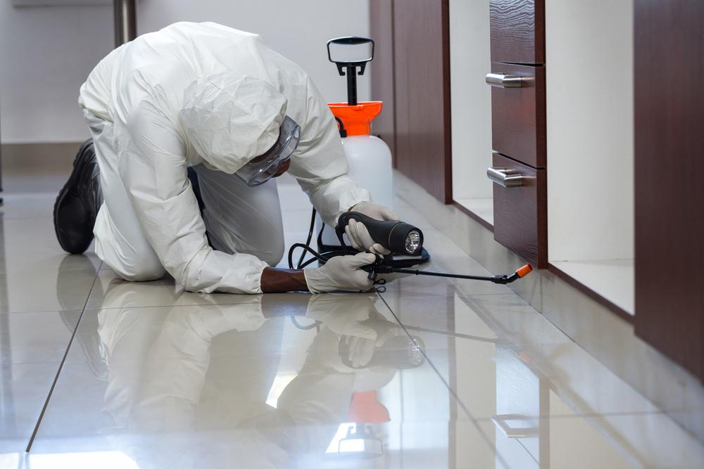 Pest Control Services in affordable price - 744644