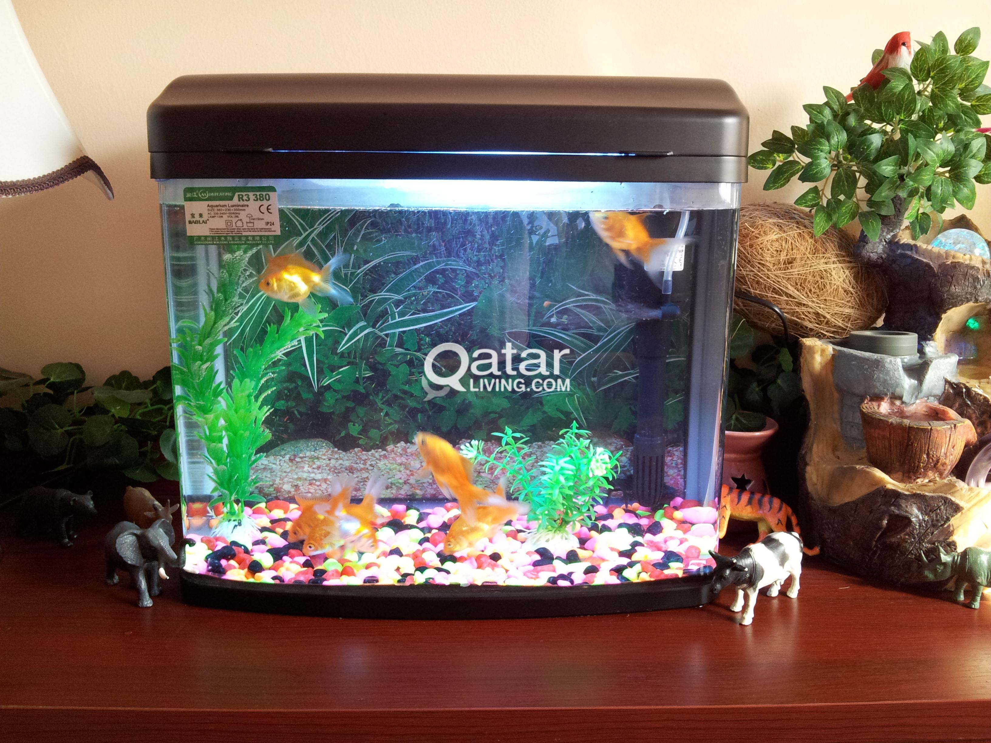 Fish Aquarium For Sale