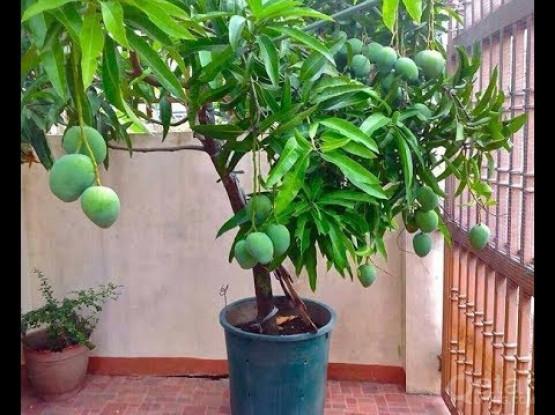 Fruit Plants BIG Cheap Price!
