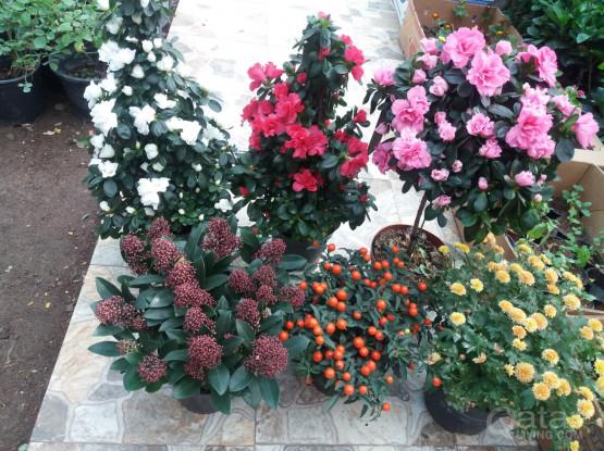 OVERSTOCK PLANTS(OUTDOOR AND INDOOR)!!!!!!!!!