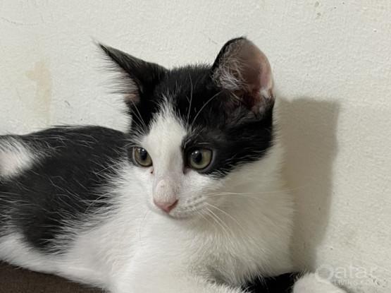 2 Cat Adoption