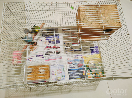 Beautiful budgies with big cage for sale