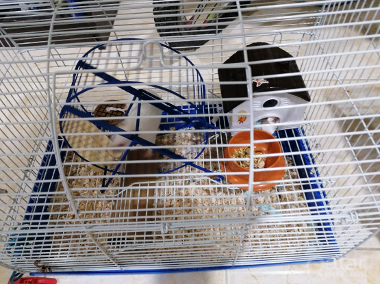 Cute Hamster with Cage